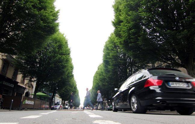 Rennes: L'avenue Janvier va perdre la moitié de ses arbres (mais d'autres seront plantés)
