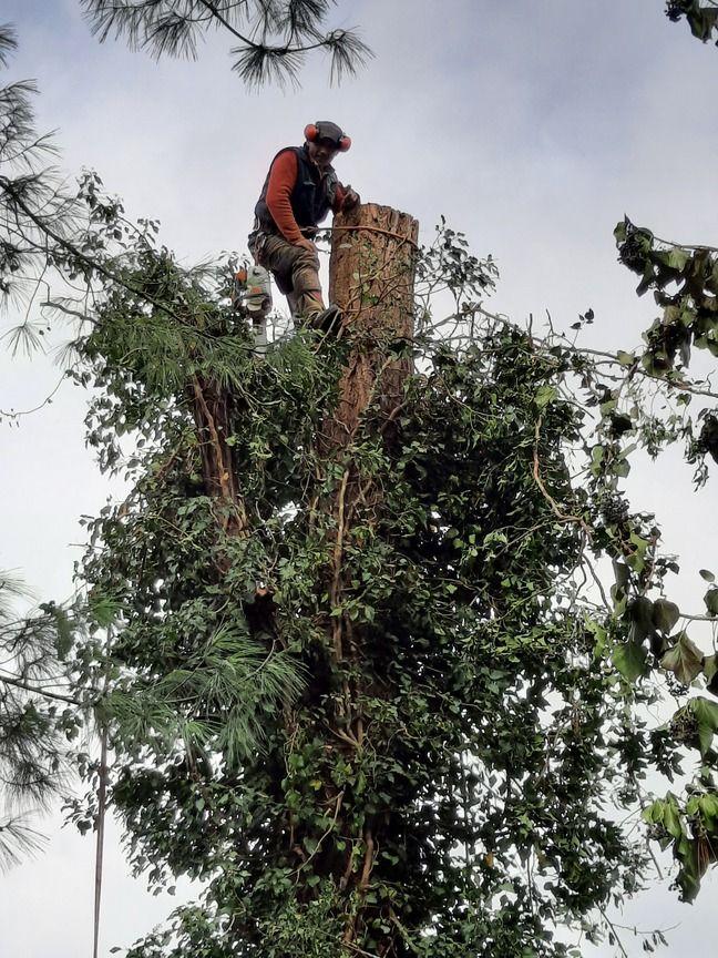 Frédéric Mattias au sommet d'un arbre. Il est 3e dans la liste des Ardennes portée par Eliane Romani.