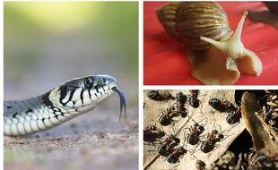 Serpents, fourmis et escargots, les nouveaux meilleurs amis de l'épiderme?