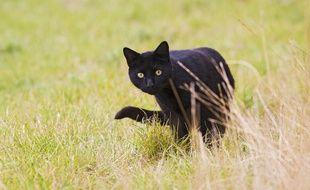 Un chat noir (illustration)