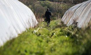 Des salariés d'une exploitation maraîchère dans le Morbihan. Photo illustration.