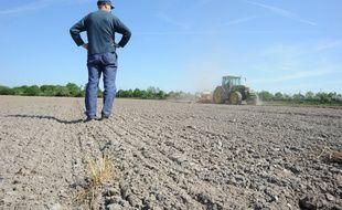 Un agriculteur constate la sécheresse de ses champs, à Treffieux (Loire-Atlantique).