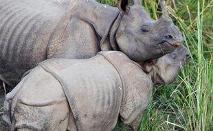 Des rhinocéros à une corne, dans un parc au Népal (illustration).