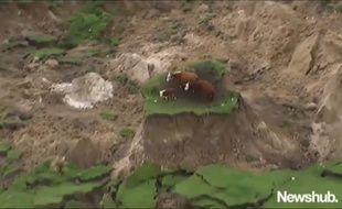 Des vaches miraculées dans un champs effondré après le séisme en Nouvelle-Zélande