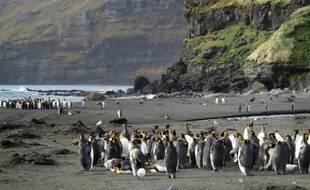 Des manchots dans l'Antarctique, en août 2012