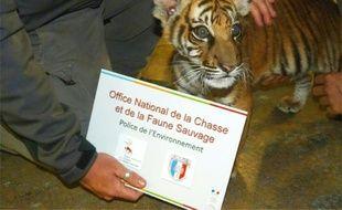 Un bébé tigre retrouvé à Saint-Ouen près de Paris par l'Office National de la Chasse et de la Faune Sauvage (ONCFS), le 18 juin 2016