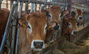 A partir du 1er avril, pour la première fois depuis 30 ans, les Européens peuvent produire autant de lait qu'ils veulent