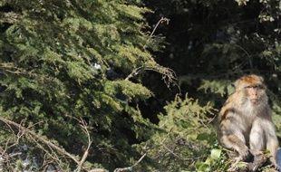 Le Maroc perd environ 30.000 hectares de forêts chaque année à cause de l'extension des projets immobiliers et de la faiblesse des programmes de reboisement, selon l'Association marocaines des droits humains (AMDH).
