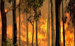 Deux personnes ont été arrêtées dans le cadre de l'enquête sur les feux à l'origine d'incendies meurtriers dans le sud-est de l'Australie, a annoncé jeudi la police qui a confirmé qu'au moins un feu avait été délibérément déclenché.