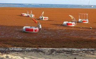 La plage Sainte Anne en Guadeloupe recouverte de Sargasse le 26 mars 2018.