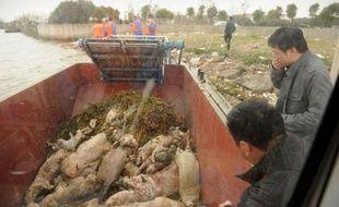 Le nombre de cadavres de porcs repêchés dans le fleuve Huangpu passant à Shanghai a doublé en deux jours, atteignant désormais presque 6.000 animaux dans un contexte de polémique sur leur origine.