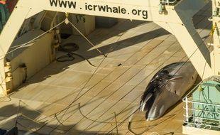 L'ONG Sea Shepherd dit avoir photographié cette baleine morte sur un navire japonais dans le Australian whale sanctuary, où toute chasse à la baleine est interdite.