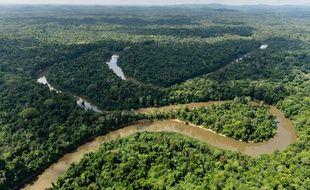 L'Amérique du sud, et notamment l'Amazonie, concentrent une majorité des décès.