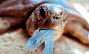 Le film «Les Océans de plastique» dénonce la pollution des mers et l'effet du plastique.