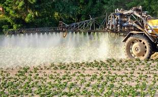 Un agriculteur répand des pesticides dans un champ de pommes de terre à Godewaersvelde le 30 mai 2012