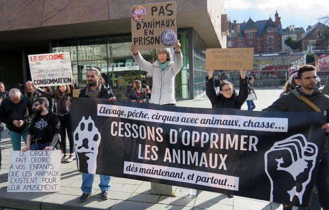 Les antispécistes combattent notamment la domination de l'homme sur l'animal.