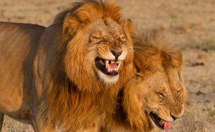 Deux gérants d'un supermarché ont été contraints de démissionner après la polémique liée à un safari-chasse effectué en 2015.