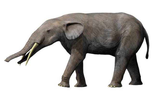 Un gomphoterium, cousin lointain de l'éléphant.