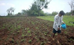 Le fils de Delfina, 13 ans, qui travaille au champs de maïs en l'absence de son père