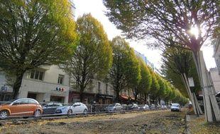 Quatre arbres ont déjà été abattus le long de l'avenue Janvier à Rennes.