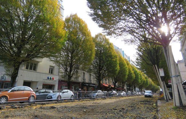 Rennes: La justice suspend l'abattage des arbres sur l'avenue Janvier