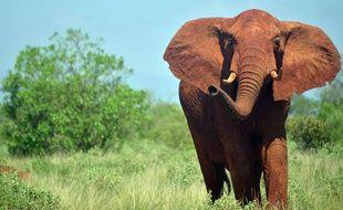 Les éléphants seront pris en charge par deux anciens soigneurs du zoo d'ANvers, en Belgique. / AFP PHOTO / Tony KARUMBA