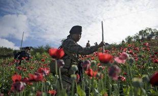 Les forces de sécurité au Guatemala ont détruit plus de 80 millions de plants de pavot près de la frontière avec le Mexique, portant un coup aux trafiquants de drogue dans la région