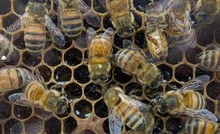 Les apiculteurs américains ont perdu 42% de leurs colonies d'abeilles entre avril 2014 et avril 2015