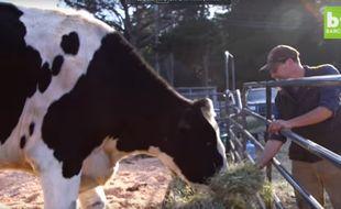 Screenshot. La vache Danniel, mesurant 1m 95 de haut