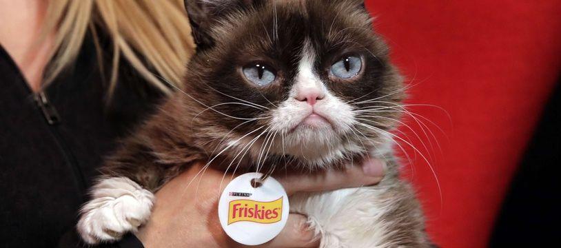 Grumpy Cat était une star interplanétaire.