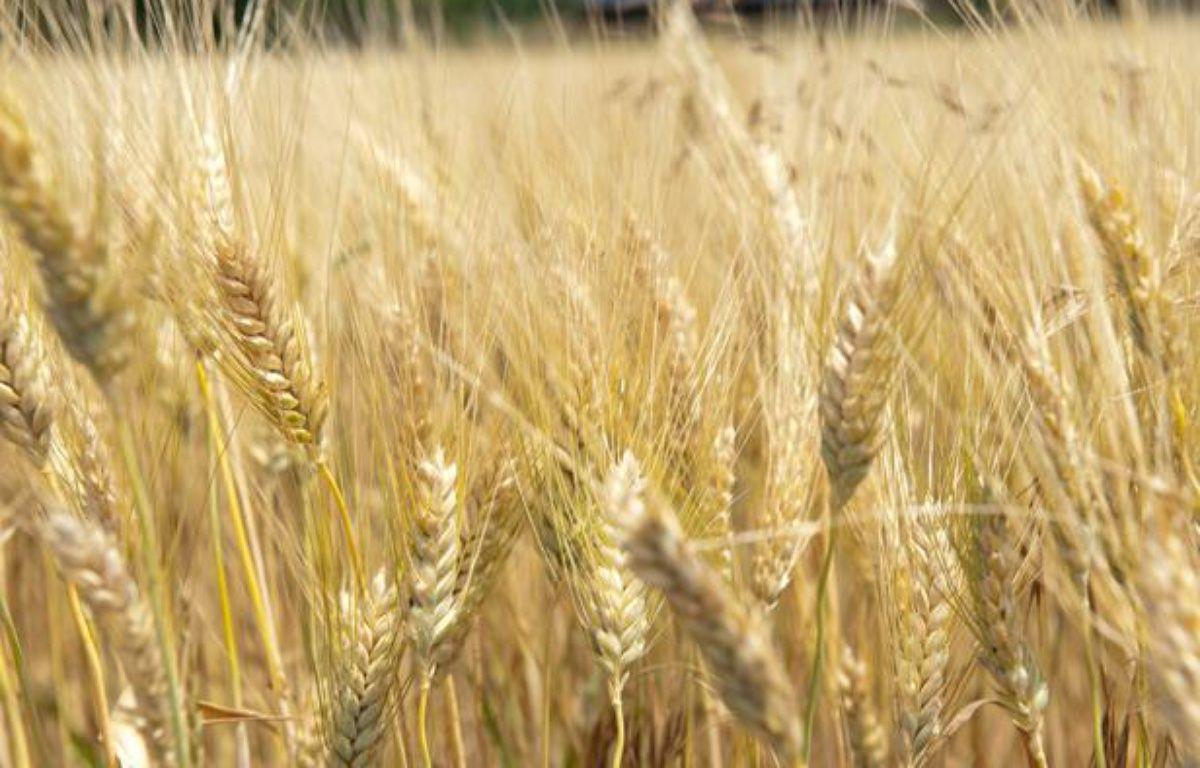Exploitation agricole dans le Tarn. – LANCELOT FREDERIC/SIPA