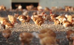L'Arabie saoudite suspend l'importation de volailles de sept régions françaises, par crainte de la grippe aviaire