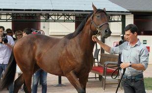 Ce jeune poulain pur sang fils de Dubawi et Pacifique a été acheté pour 2,6 millions d'euros le 16 août 2015 lors des prestigieuses ventes de yearlings de futurs chevaux de course de galop, à Dauville