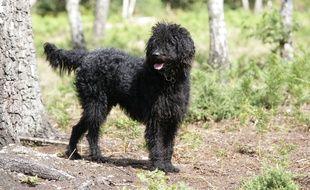 Illustration d'un chien pendant une promenade en forêt
