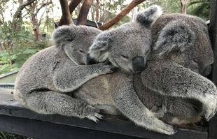 Au parc des reptiles australiens, le 10 juin 2021, à Somersby.