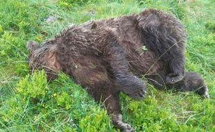 L'ours retrouvé mort le 9 juin 2020 à Ustou dans l'Ariège.