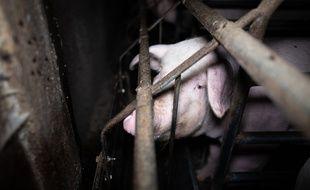 Les images ont été tournées  en septembre dans un élevage à Dirinon dans le Finistère.