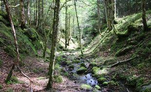 La première forêt cinéraire de France, se trouve en Haute-Garonne, à Arbas.