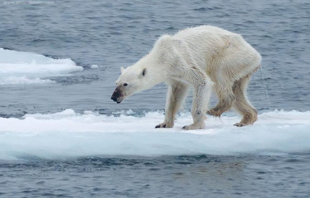 Postée en août dernier, la photo d'un ours polaire affamé, a suscité l'émotion des internautes sur la toile – Kerstin Langenberger - Facebook