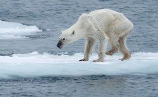 Postée en août dernier, la photo d'un ours polaire affamé, a suscité l'émotion des internautes sur la toile