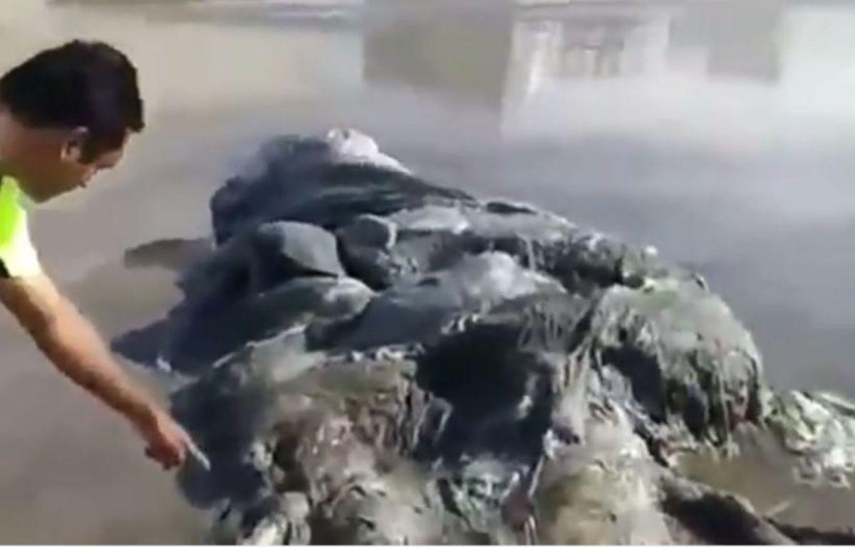 Une étrange créature a été retrouvée sur une plage d'Acapulco. – Youtube/Video Lazy