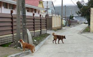 Des chiens errants à Adler, autour du parc olympique des Jeux de Sotchi, le 12 février 2014