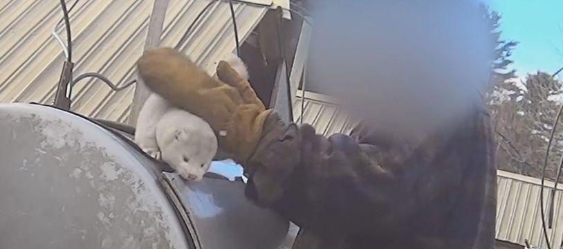 Capture d'écran d'une vidéo réalisée par l'association PETA dans un élevage de fourrure du Wisconsin (Etats-Unis)