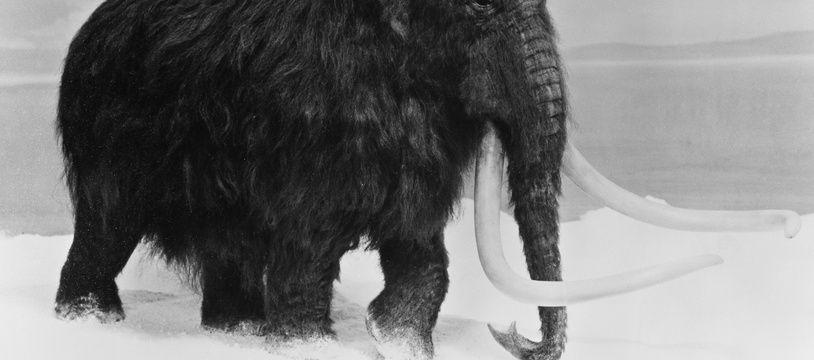 Illustration d'un mammouth.