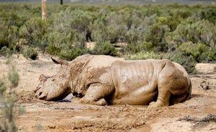 Le massacre des rhinocéros se poursuit à un rythme record en Afrique du Sud, 159 animaux ayant été abattus dans le pays depuis le début de l'année, a indiqué mercredi la ministre de l'Environnement Edna Molewa.