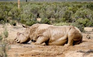 Le massacre des rhinocéros en Afrique du Sud a atteint un nouveau record, avec 341 animaux braconnés depuis le début de l'année, contre 333 sur l'ensemble de 2010, a indiqué jeudi l'organisation de défense de l'environnement WWF.
