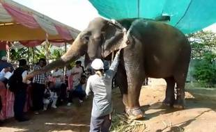 Sambo, le seul éléphant encore en activité à Phnom Penh, a été bénie par une foule de moines bouddhistes le 25 novembre.