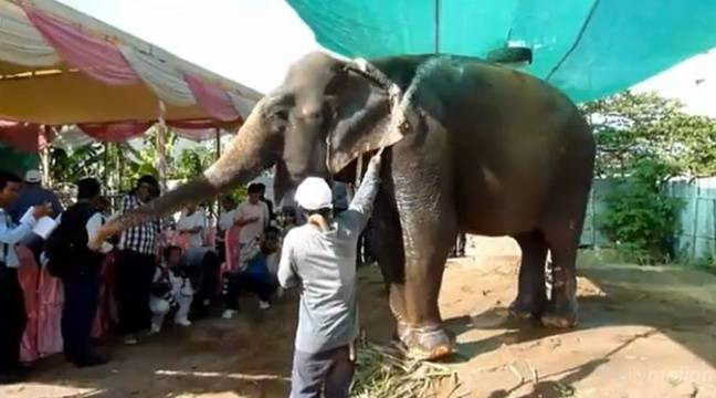 Sambo, le seul éléphant encore en activité à Phnom Penh, a été bénie par une foule de moines bouddhistes le 25 novembre. – Abulezz/AFP