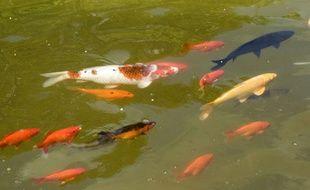 Des poissons dans un jardin botanique.