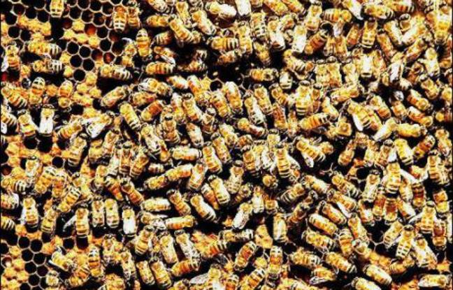 h agen dazs veut sauver les abeilles. Black Bedroom Furniture Sets. Home Design Ideas